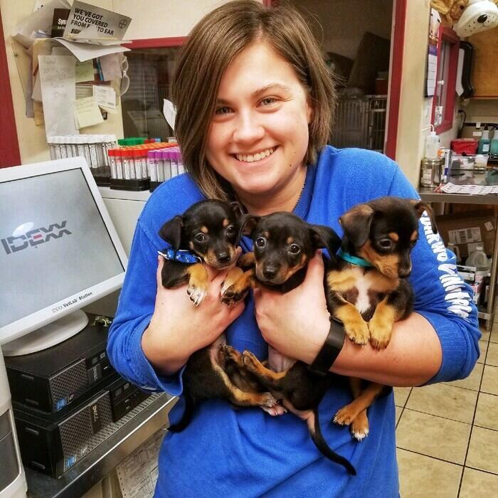 Angela</br> Licenced Veterinary Technician photo